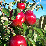 Apple Hill Orchard Mansfield, Ohio